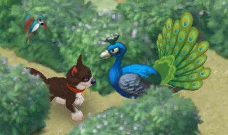 クジャクと向き合い、きりりとしたクジャクの目を真似する犬:ガーデンスケイプ(Gardenscapes)