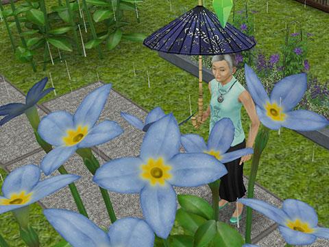 雨の中、傘をさして紫陽花に見惚れる、おばあちゃんシム(The Sims フリープレイ)